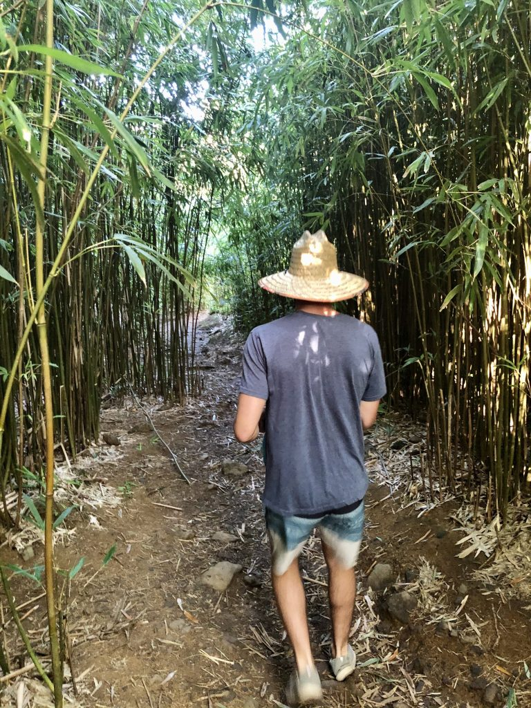 Beginning of the hike into the Bamboo Forest past mile marker 6.5 along Road to Hana